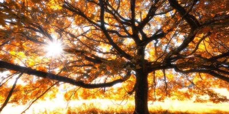7 Idées Pour Gérer Son Stress Avec La Pleine Conscience Dans Une Journée De Travail